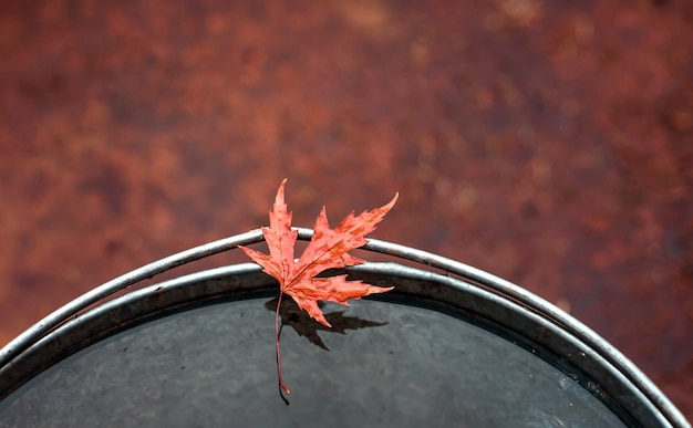 Beautiful red maple leaf on the edge of a tin bucket with water.
