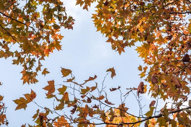枝に美しい赤いカエデの葉