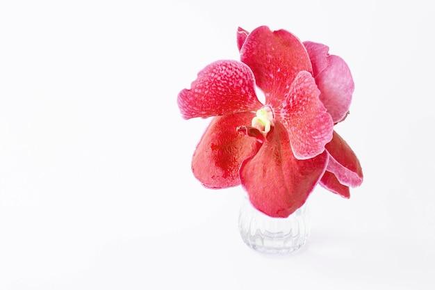 유리 꽃병에 아름 다운 붉은 난초 꽃.