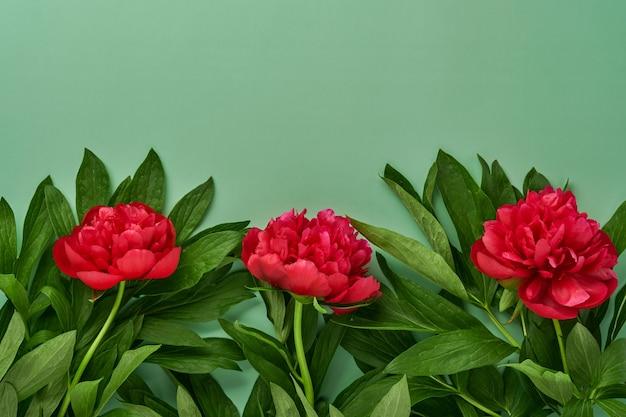 아름다운 붉은 모란 꽃은 녹색 배경, 위쪽 전망, 복사 공간, 평평하게 놓여 있습니다. 발렌타인 데이, 어머니의 날 배경입니다.