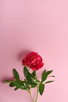 분홍색 배경, 평면도, 복사 공간, 평면 배치 위에 아름 다운 붉은 모란 꽃 꽃다발. 발렌타인 데이, 어머니의 날 배경.