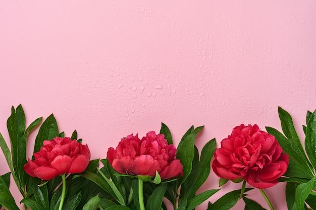 Красивый красный букет цветов пиона на розовом фоне, вид сверху, копия пространства, плоская планировка. день святого валентина, день матери фон.
