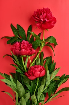 Красивый красный букет цветов пиона на красном фоне, вид сверху, копирование пространства, плоская планировка. день святого валентина, день матери фон.
