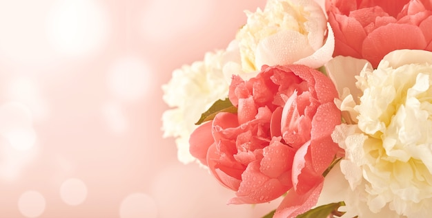 분홍색 배경 위에 아름다운 빨간색, 분홍색 및 흰색 모란 꽃 꽃다발, 톤 이미지, 위쪽 전망, 복사 공간, 평평한 평지. 발렌타인, 결혼식 및 어머니의 날 배경입니다.
