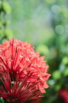 Beautiful red pink spike flower in the garden with bokeh background.