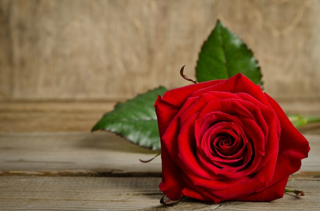 Beautiful red rose on wooden planks