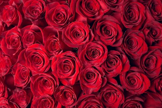 Красивые красные розы фон Premium Фотографии