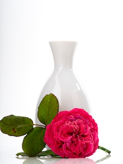 Beautiful red roses in white vase on white