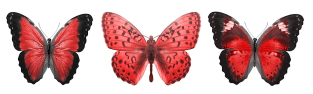 아름 다운 붉은 열 대 나비 절연