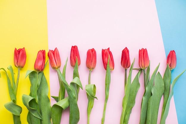 Красивые красные тюльпаны на разноцветных бумажных фонах с копией пространства. весна, лето, цветы, цветовая концепция, женский день.