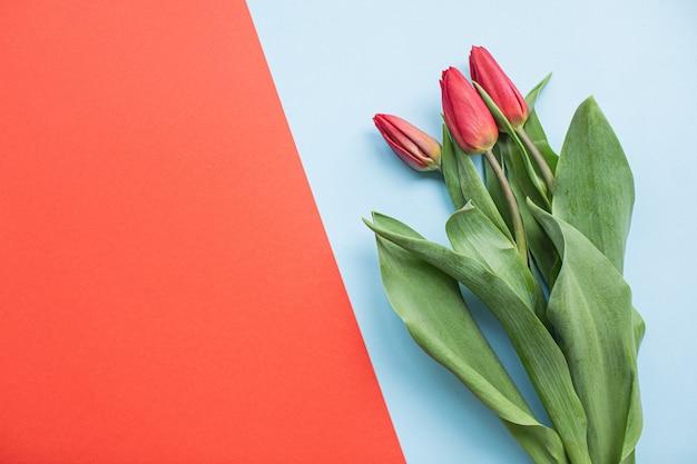 コピースペースと色とりどりの紙の背景に美しい赤いチューリップ。