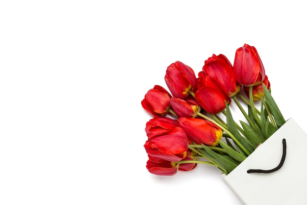 Beautiful red tulips in white paper gift bags on white background.