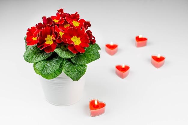 봄 꽃과 흰색 바탕에 심 혼의 형태로 붉은 촛불의 아름 다운 빨간색 노란색 꽃다발.