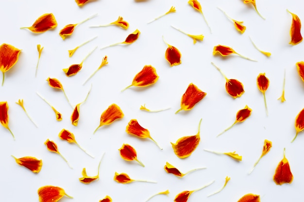 Beautiful red yellow marigold flower petals on white