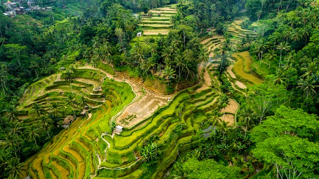 Beautiful rice terraces on the bali island aerial view