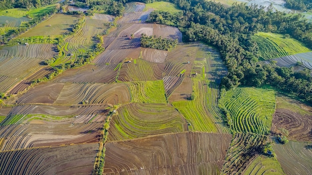 Beautiful rice terraces in morning light near tegallalang village, ubud, bali, indonesia.
