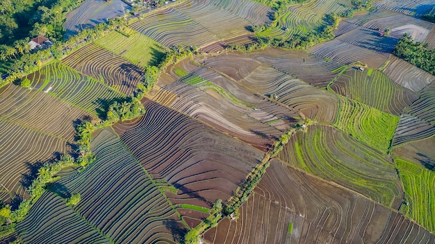 Beautiful rice terraces in morning light near tegallalang village, ubud, bali, indonesia.