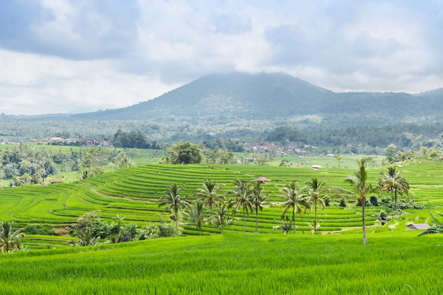 Beautiful rice terraces and mountains on bali