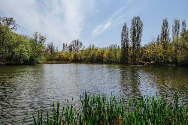 湖の緑の木々と草の青い空の自然の美しい夏の風景と夏のカラフルな風景の美しい川岸