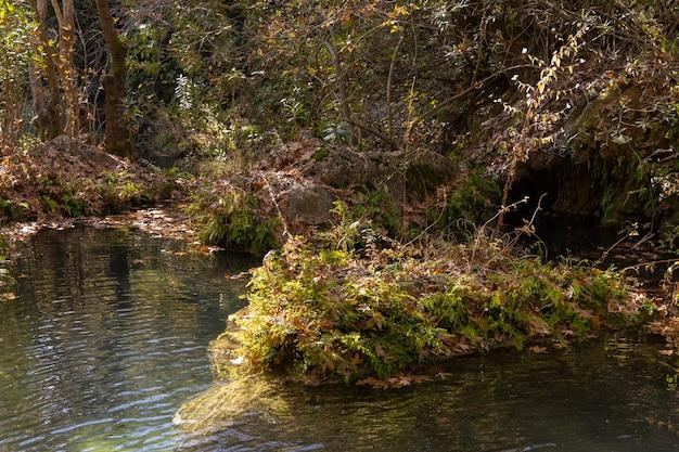 自然の中の美しい川