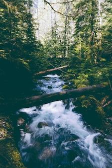 森の中に強い流れがある美しい川