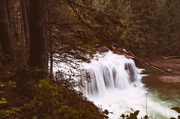 Beautiful river with a waterfall in the woods