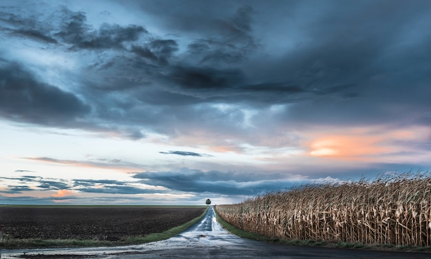 Beautiful road going through a farm and a cornfield with a tree at the end under the colorful sky