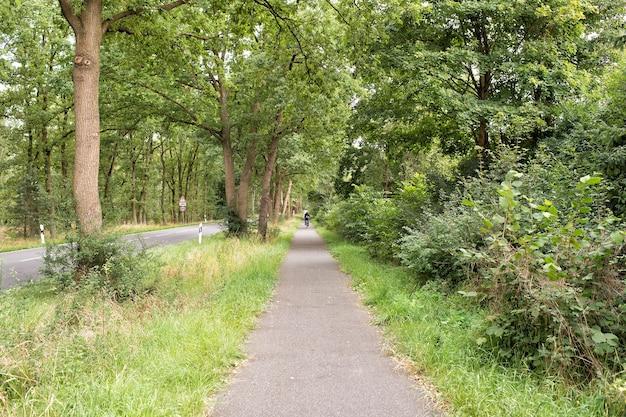 Красивая дорога или тропинка в переулке с зелеными деревьями и травой летом в солнечном открытом воздухе с ciclist на велосипеде