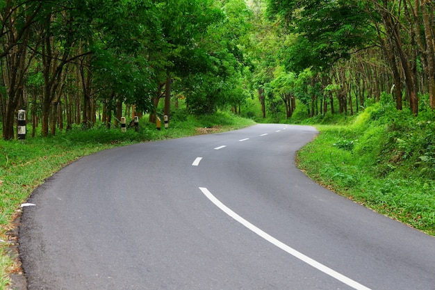 Beautiful road and tree view