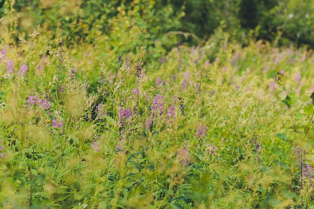 Красивые придорожные цветы, разнообразие природы