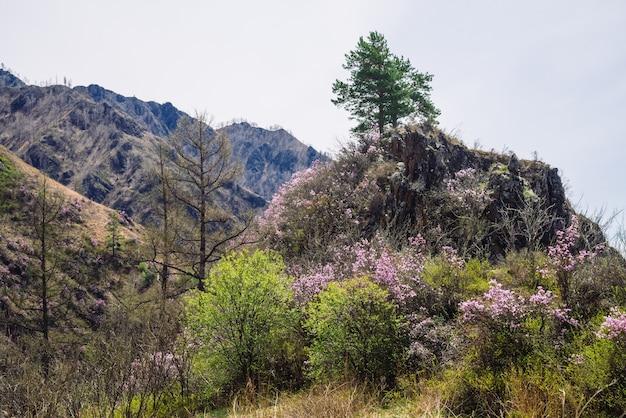 푸른 나무와 핑크 꽃과 아름 다운 바위 회색 질감 된 배경. 표면 산 절벽 클로즈업.