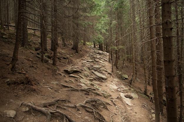 松の森の美しい岩の多い道