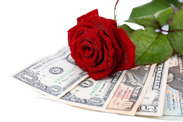 Красивая роза и деньги, на белом