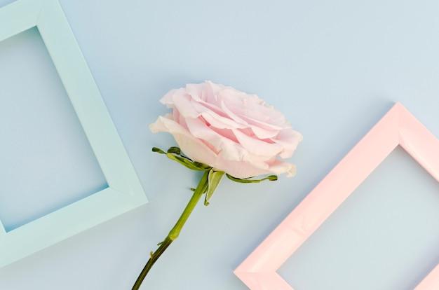 美しいバラとパステルの空のフレーム
