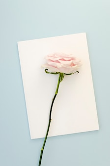 Beautiful rose on empty card