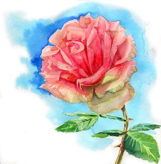 美しいバラの花、白い背景の水彩画イラスト