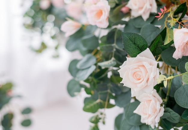 Beautiful rose flowers on light