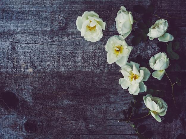 Красивая ветка шиповника с белыми цветами