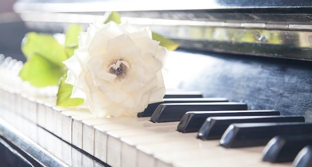 Красивая роза на клавиатуре фортепиано. любить музыку