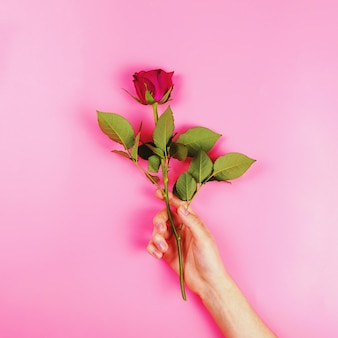 Beautiful rose in a woman's hand, flat lay, present concept, square image