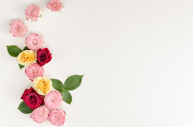 Beautiful roses and leaves copy space