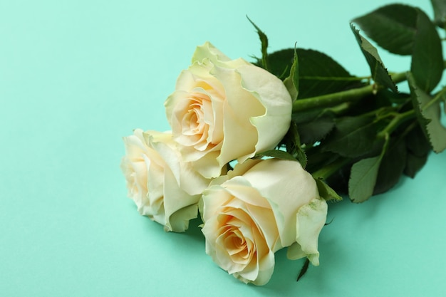 민트에 아름 다운 장미를 닫습니다.