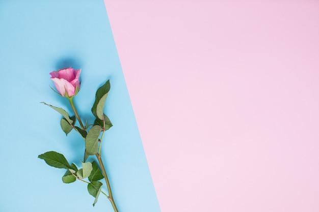 Красивые розы на разноцветных бумажных фонах с копией пространства. весна, лето, цветы, цветовая концепция. доставка цветов