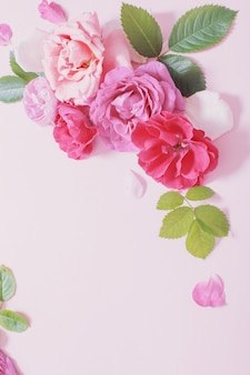 분홍색 종이 배경에 아름다운 장미