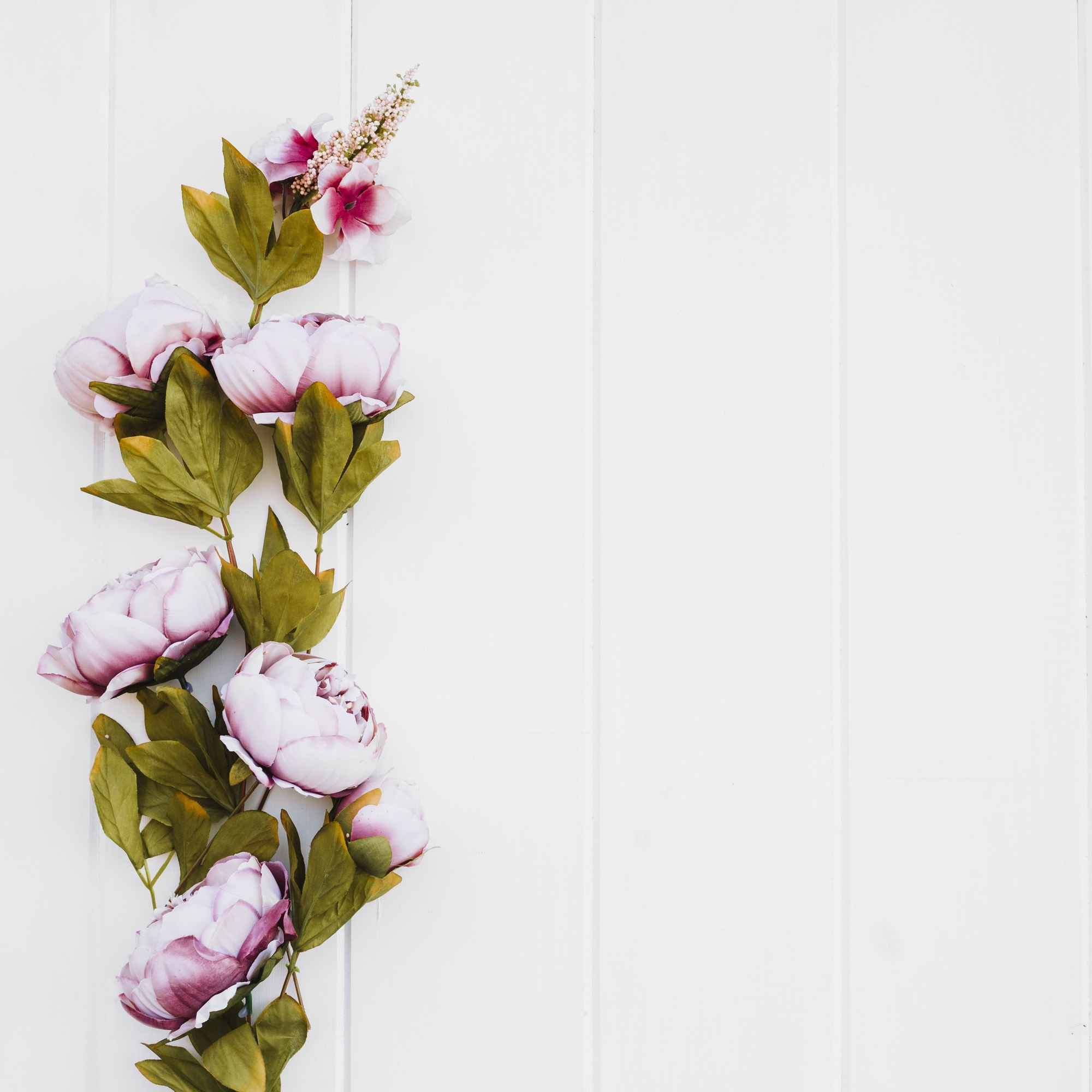 Beautiful roses on white background with space on the right