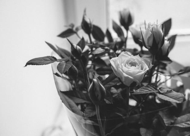 창틀에 아름다운 장미