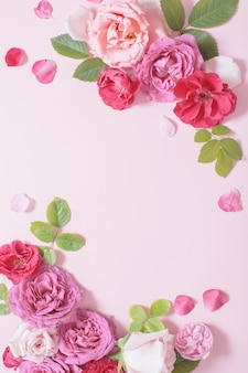 Beautiful roses on pink paper background