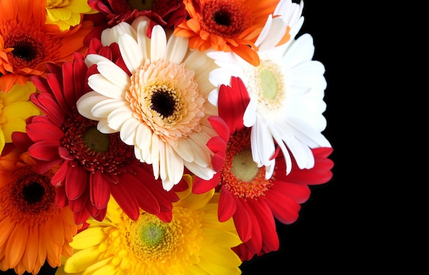 Beautiful round motley bouquet of multicolor gerberas on left side of the photo isolated on black background top view closeup