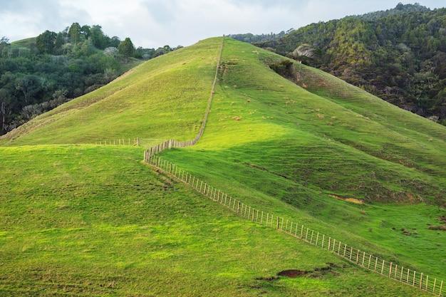 ニュージーランドの美しい田園風景-緑の丘と木々