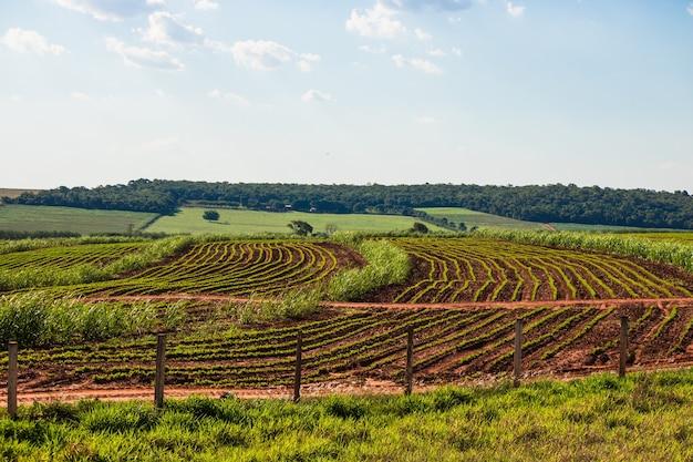 晴れた日に青い空とサトウキビ農場の美しい田園プランテーション